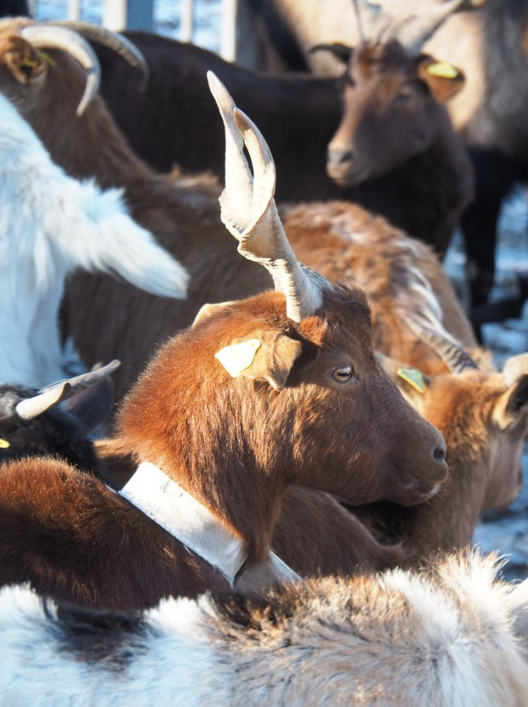 article_1612_Animaux d\'Hiver_07