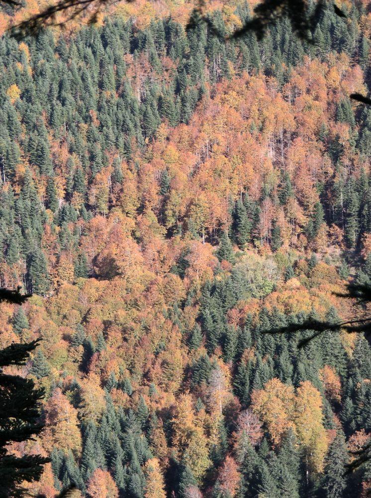 Paysage_automne_AFDV_07