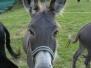 Rando ânes