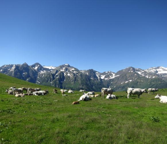Sejour_Rando_Grand Tour du Val d'Aran_38
