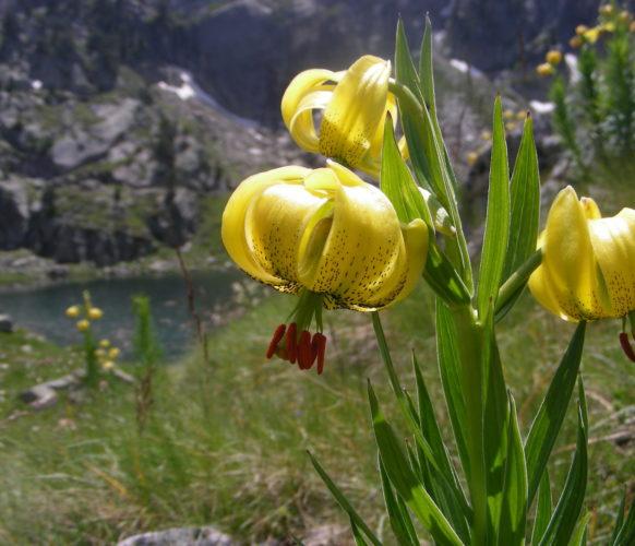 Sejour_Rando_Grand Tour du Val d'Aran_78